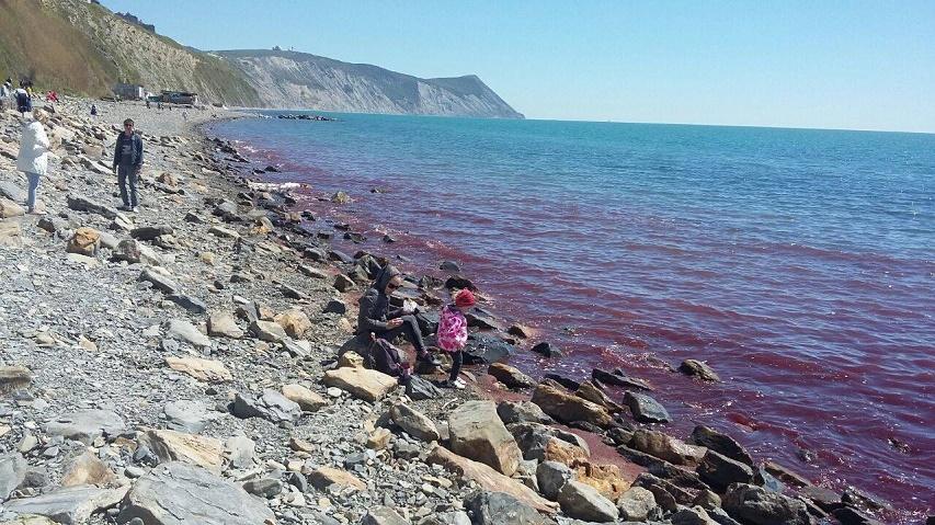 Черное море покраснело