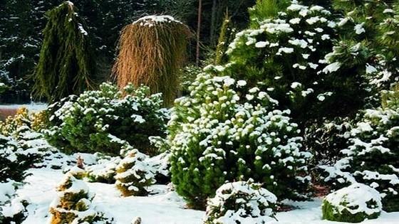 Ученые рассказали, как сделать растения вечнозелеными