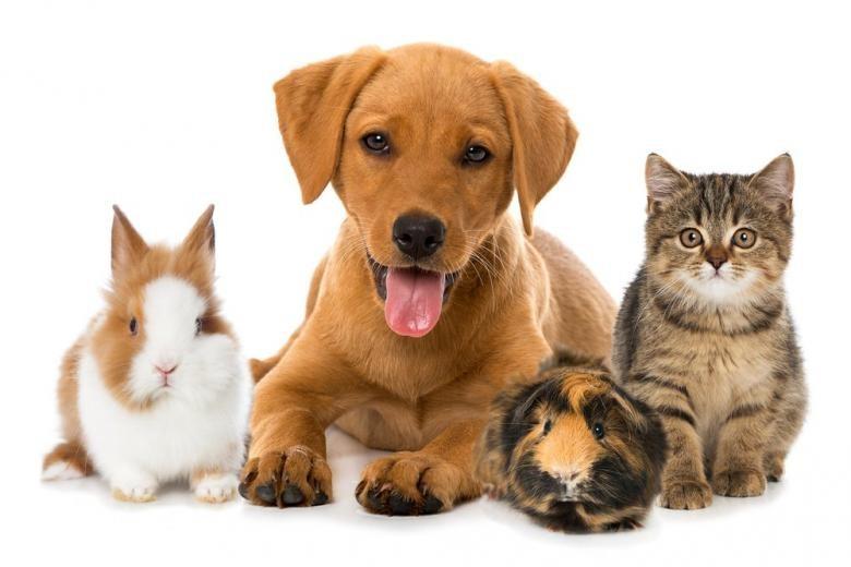 Правительство подтвердило запрет на конфискацию животных за долги