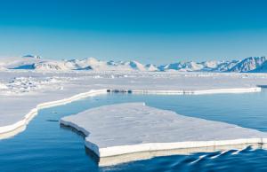 Ученые предупреждают об угрозе борщевика для Арктики