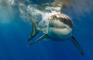 Впервые за 7 лет в Новой Зеландии акула убила человека