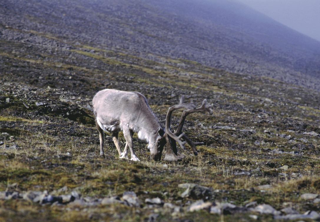 Ученые Якутии и Петербурга создадут лабораторию по исследованию растительности Арктики