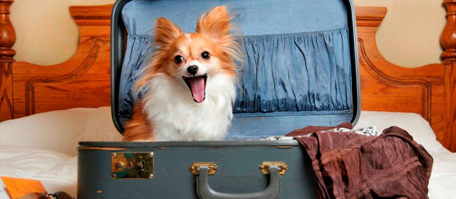 Новые правила перевозки домашних животных