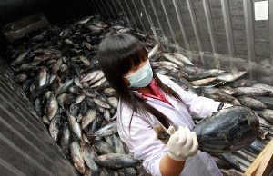 У Фукусимы выявили зараженную радиацией рыбу