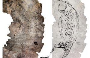 В Австралии нашли наскальный рисунок кенгуру возрастом 17 тысяч лет