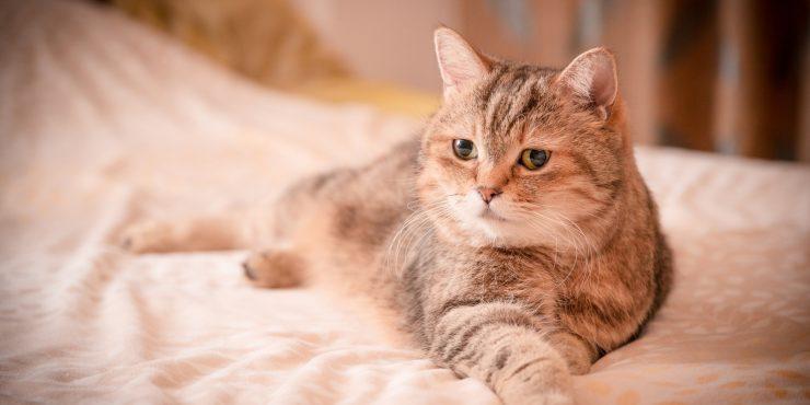 Регистрация домашних животных в России может стать обязательной