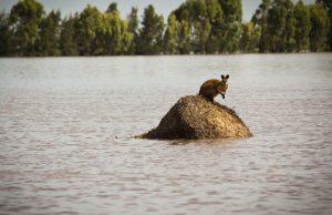 Из-за наводнения в Австралии эвакуированы 18 тыс. человек