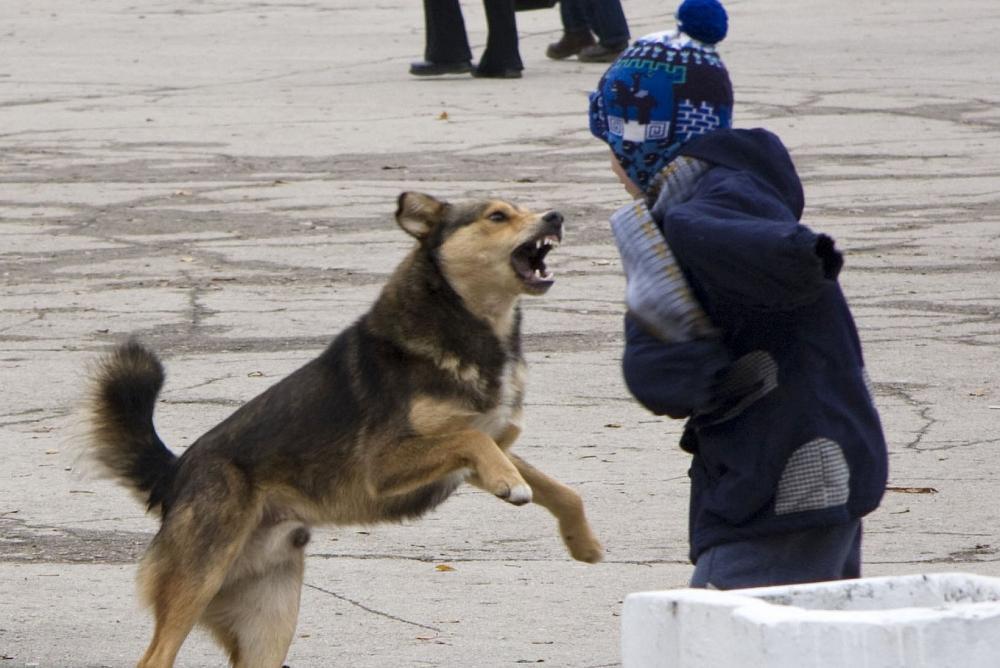 В Башкирии бродячие собаки насмерть покусали ребенка