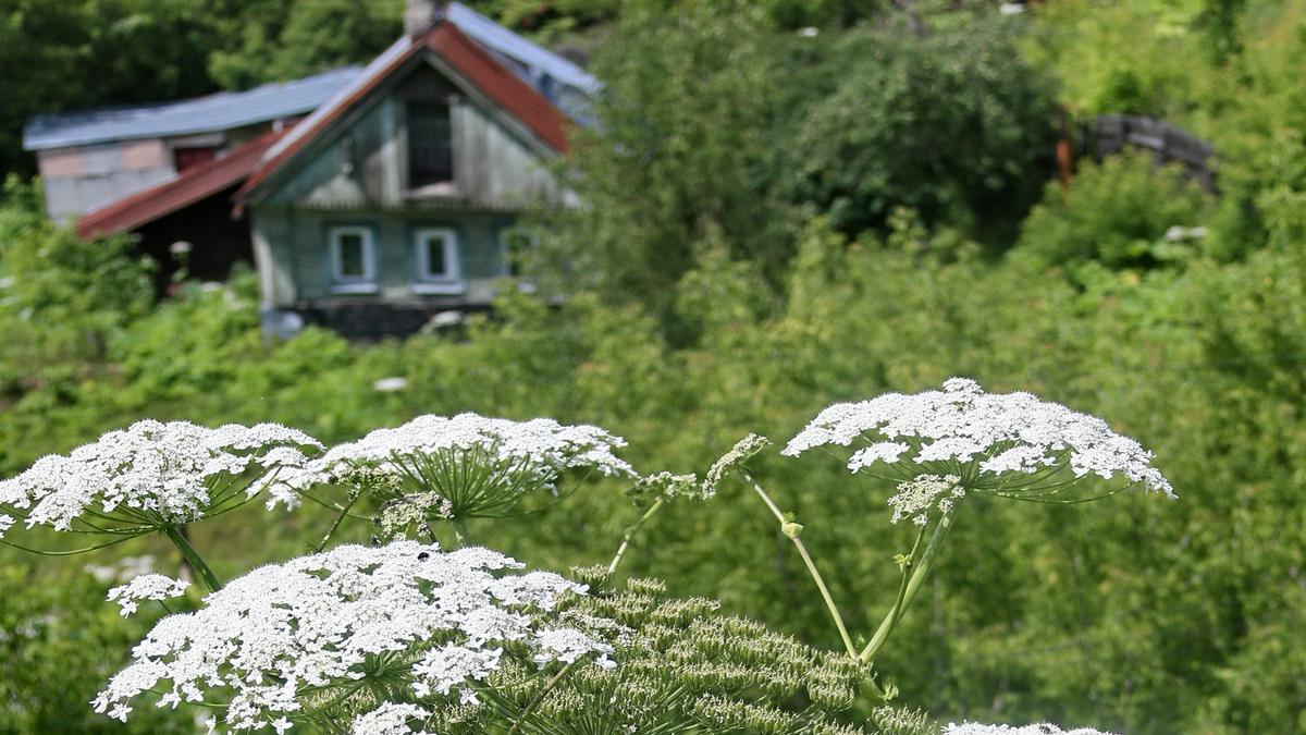 Какие растения на даче могут привести к большим штрафам