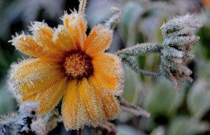 Москвичей предупредили о вероятных заморозках в конце мая