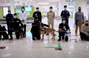 В Великобритании собак обучили определять коронавирус