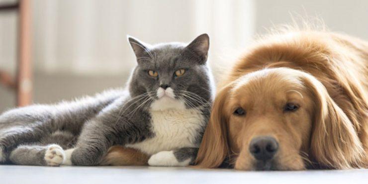 Путин подписал указ о запрете изымать домашних животных за долги