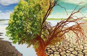 Температура нашей планеты в 2020 году достигла рекордного показателя
