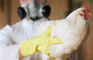 В Китае выявили первый случай инфицирования птичьим гриппом