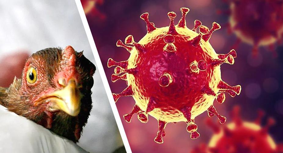 В Китае зафиксировали первый случай заражения человека птичьим гриппом