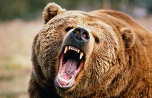 22 июня в Красноярском крае на отдыхающих в парке напал медведь