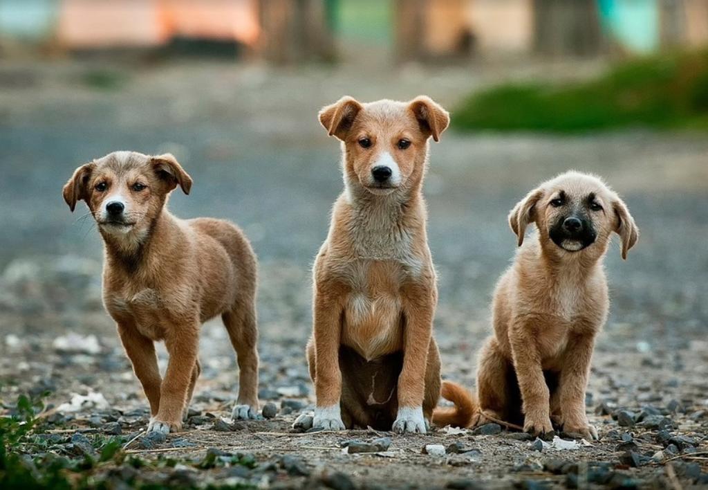 Дума установит высокие штрафы для защиты животных