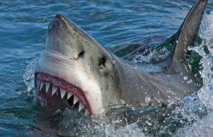 На пляже в Бразилии акула атаковала отдыхающего
