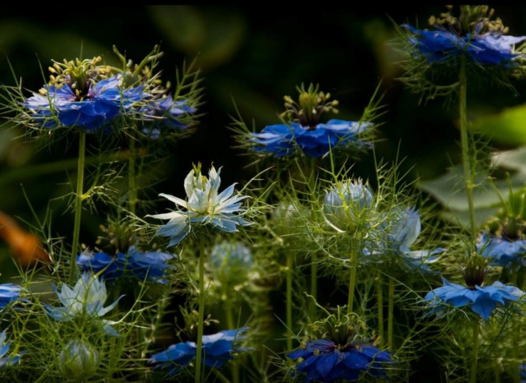 Ученые нашли растение, которое эффективно борется с коронавирусом