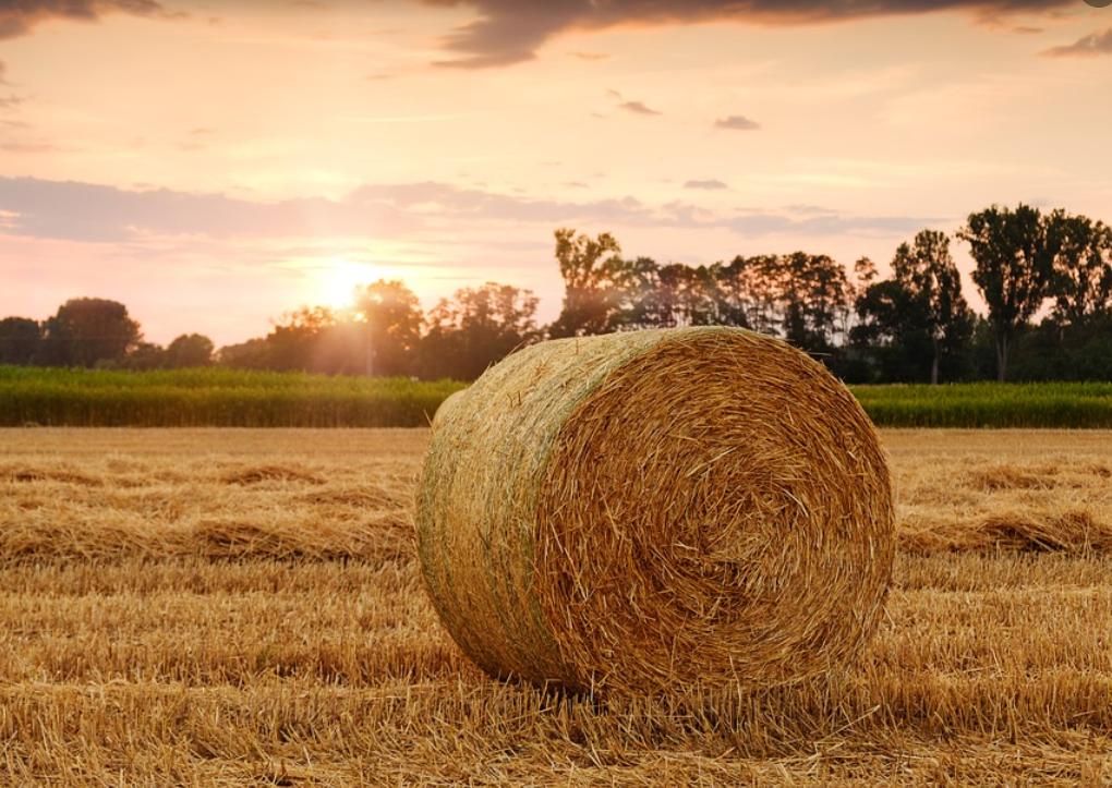 Белоруссия запретила вывозить зерно в другие страны