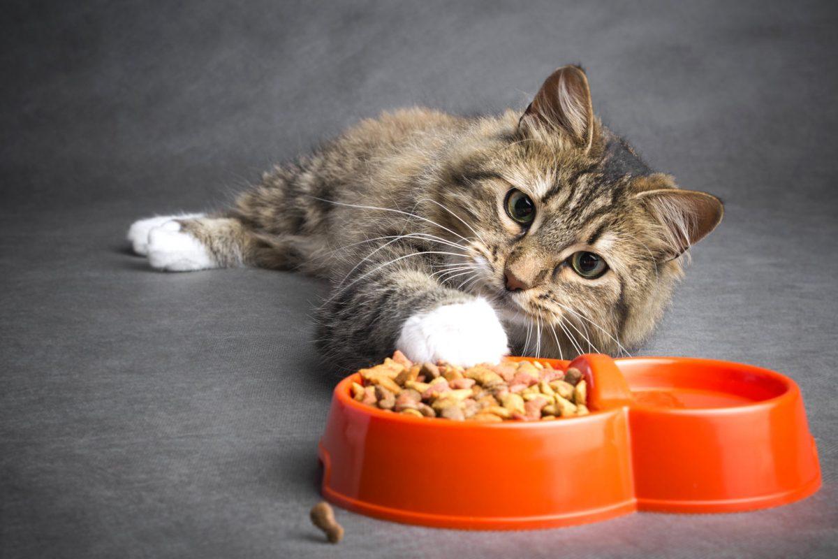 Кошки не готовы работать ради еды
