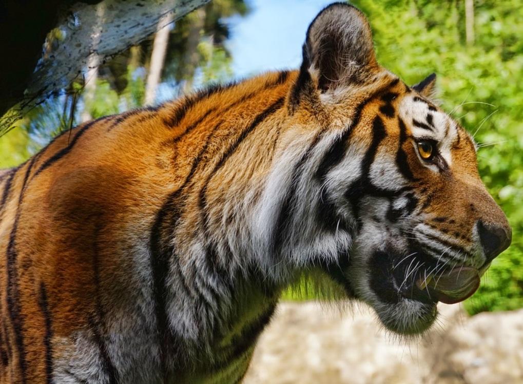 Животным в зоопарках США делают прививки от коронавируса