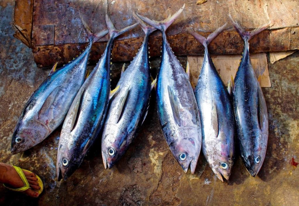Литва выдвинула претензии России по чрезмерному вылову рыбы в Балтийском море